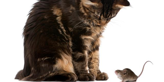 Kanker bij honden en katten neemt fors toe