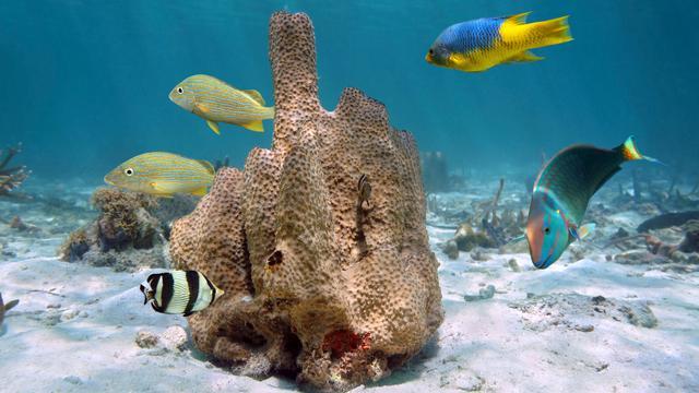Eerste dieren zorgden voor zuurstof in de zee