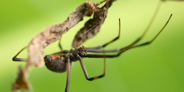 Schip met giftige spinnen geweigerd bij Rotterdamse haven
