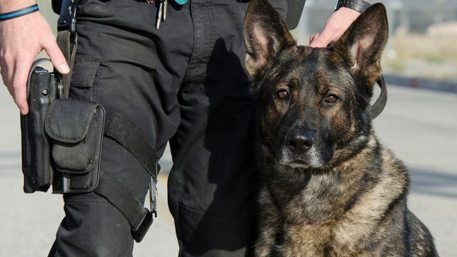 Auto-inbreker uit Leiden door politiehond gebeten bij arrestatie