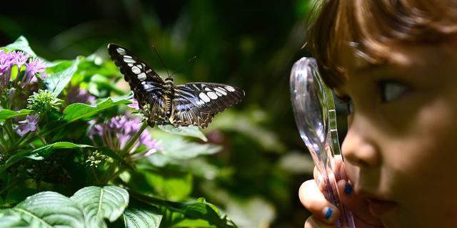 Zeldzame nachtvlinder gezien op Goeree-Overflakkee
