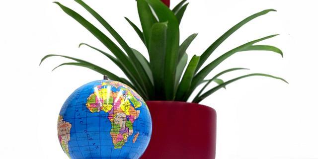 Zaandam krijgt energieopwekkende planten