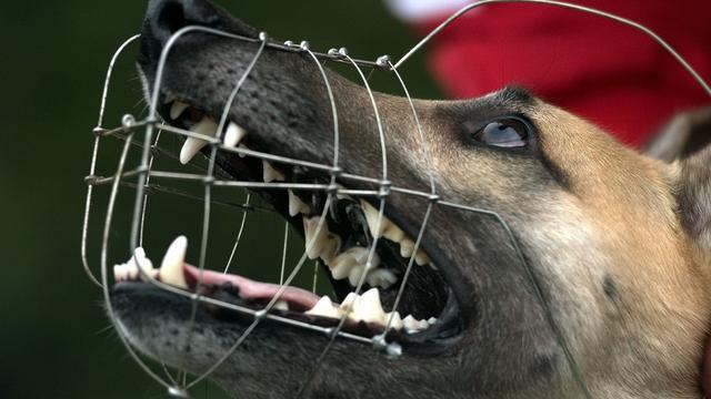 Rotterdam muilkorft agressieve honden