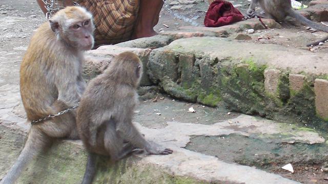 Jakarta haalt apenshow van straat