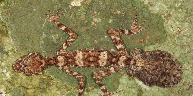 Nieuwe dieren ontdekt in 'verloren wereld' in Australië