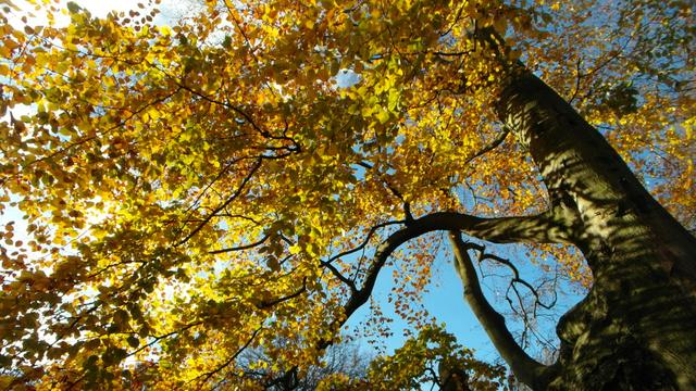 De vier mooiste herfstwandelingen volgens boswachters