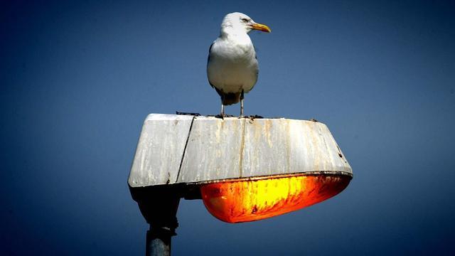 Raalte wil minder lichtvervuiling