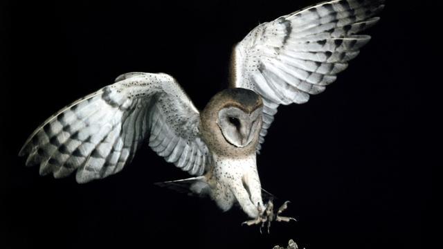 Geruisloze vlucht van uilen verklaard