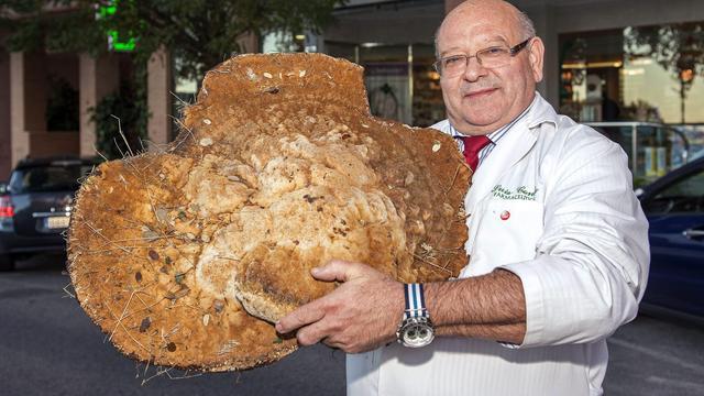 Spanjaard vindt paddenstoel van twaalf kilo