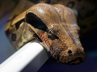 Man kon niet aantonen dat slang van hem was