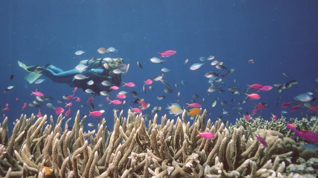 'Ruim een derde koraal Great Barrier Reef dood door verbleken'