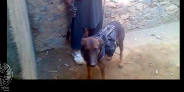 NAVO-hond ontvoerd door Taliban