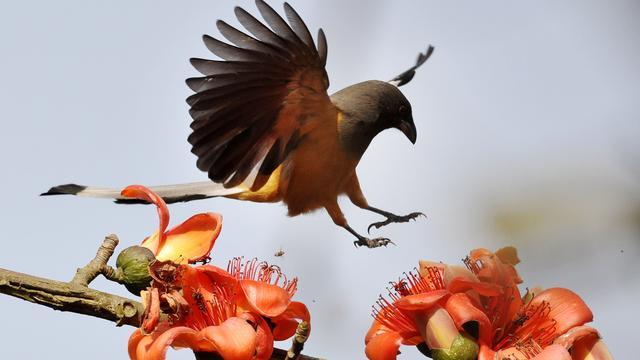 Honderden nieuwe vogelsoorten in kaart gebracht