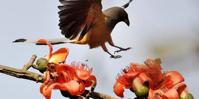 Computer kan vogels identificeren aan gezang