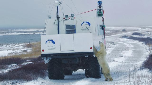 Google legt ijsberen vast op Street View