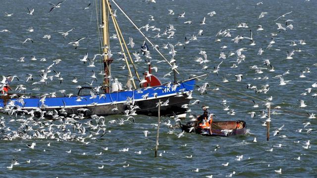 'Drie jaar niet vissen in IJsselmeer vanwege lage visstand'
