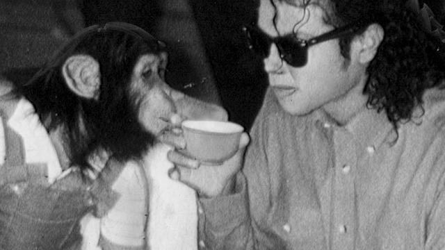 'Chimpansee Michael Jackson werd mishandeld'
