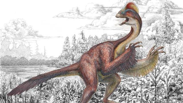 Fossielen van reusachtige dinosauruskip opgegraven