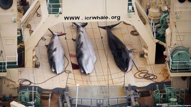 Japanse walvisvaarders varen uit