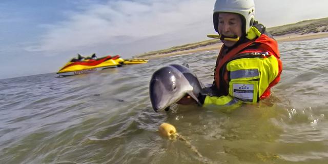 Leden KNRM redden bruinvissen uit visnet
