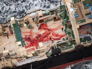 Formeel is jacht op walvissen toegestaan