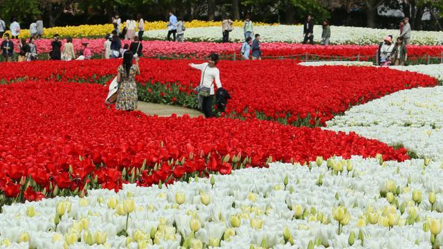 Bloemenexport profiteert van vraag Duitsland