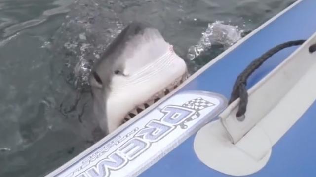 Zesde aanval haai North-Carolina deze maand