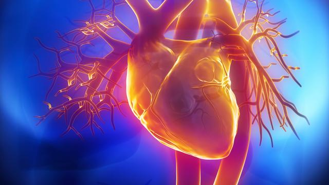 Onderzoekers vinden efficiëntere manier voor inzet stamceltherapie