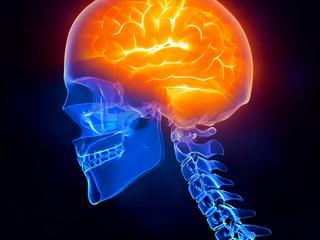 Onderzoek toont relatie tussen gezondheid hart en brein
