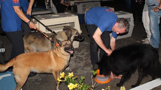 Nederlandse speurhonden op pad in Panama