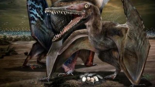 Eieren van Pterosaurus ontdekt