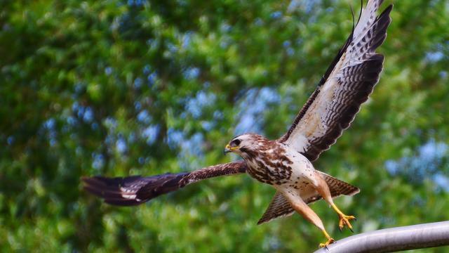 Buizerd en zilverreiger zijn meest getelde vogels