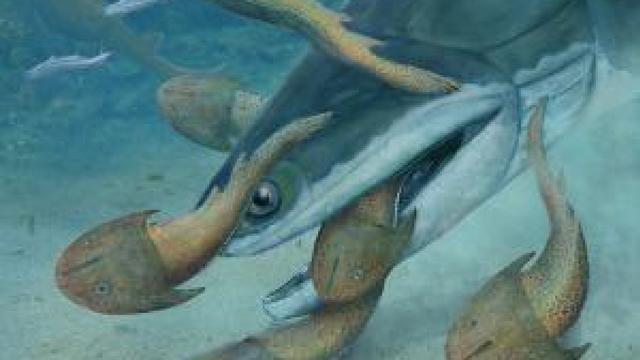Eerste roofvis kraakte schelpdieren met sterke kaken
