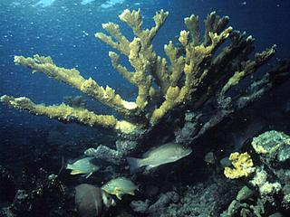 Behandeling biedt nieuwe mogelijkheden voor herstel koraalriffen