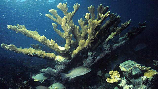 Meer onderwateronderzoek naar oude nederzettingen nodig