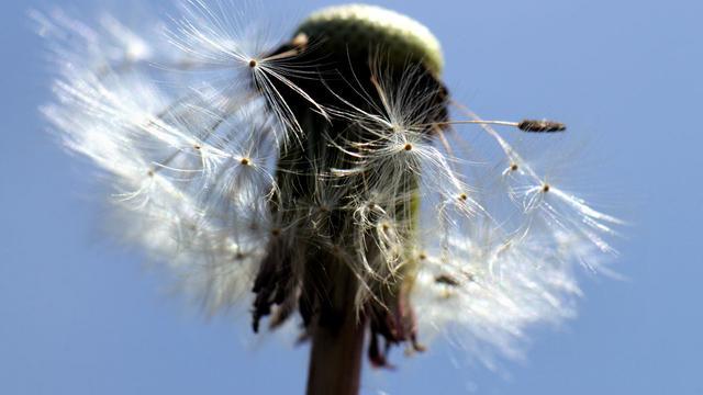 Typisch pollenweer: 'Draag zonnebril bij hooikoorts en hou ramen dicht'