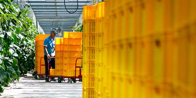 Minder illegale arbeid in Westlandse kassen