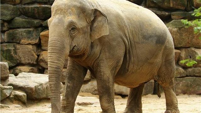 Kudde neemt afscheid van olifanten