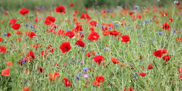 'Bloemen helpen bij depressie'