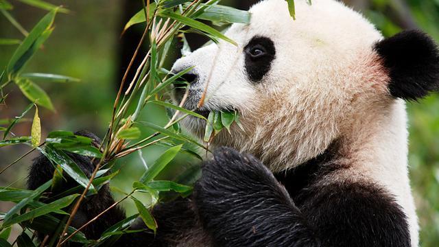 Lijst bedreigde dieren en planten groeit