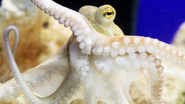 Vrouw in mond 'gepenetreerd' door inktvis