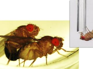 Insecten halen verloren slaap ook niet meer in