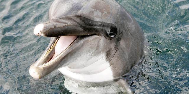 Aangifte tegen Dolfinarium om ontucht met dolfijn