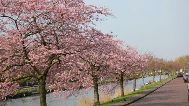 Nederland heeft groenste stad en dorp van Europa