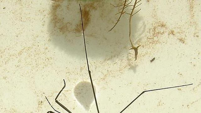 Seksbeluste schaatsenrijder grijpt vrouw met antennes