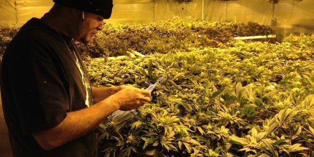 VS wil gedoogbeleid marihuana terugdraaien