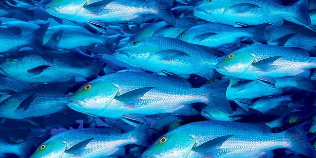 Wereldbank wil coalitie voor redden oceanen