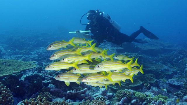 Klimaatwetenschappers: Oceanen veel meer opgewarmd dan gedacht