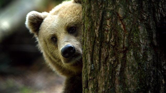 Slapeloze beer heeft eindelijk rust door kou