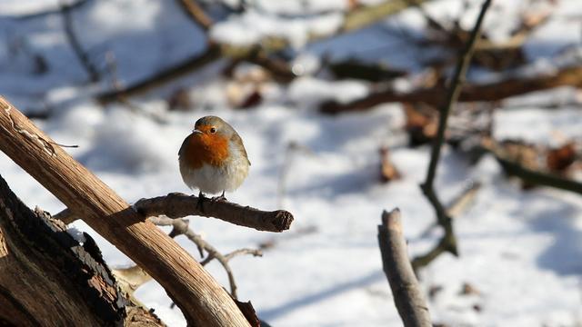 Vogels vallen 10 procent af in koude nacht